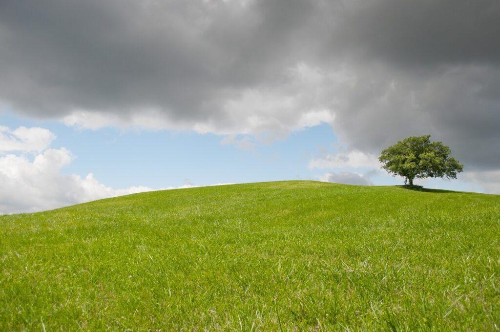 草原, 小高い丘の写真